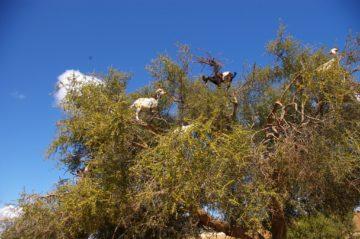 モロッコ体験談 夏7月no.1|サハラ砂漠の風の画像