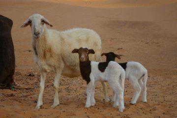 モロッコ体験談 夏7月no.2|サハラ砂漠の風の画像
