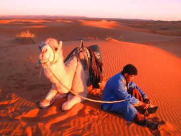 マラケシュ発砂漠ツアー4日 | サハラ砂漠の風の画像