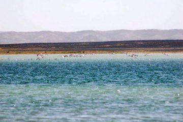 「サハラ砂漠の風」体験談 9月 no. 9の画像