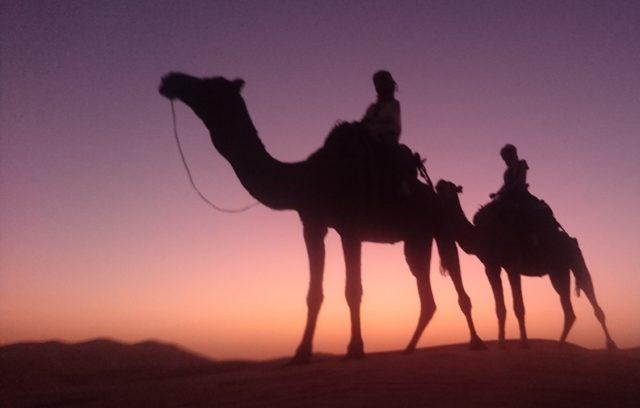 サハラ砂漠の風ツアーで訪れた砂漠らくだでトレッキング