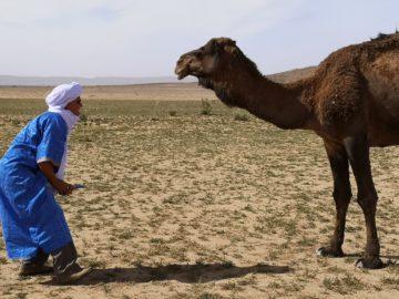 モロッコツアー秋11月の体験談 - 気候や服装、ツアーの組み立て方など旅の準備の参考にの画像