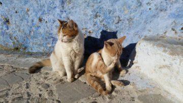 モロッコ体験談 冬12月no.6の画像