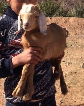 スタッフブログ_コロナ禍でのサハラ砂漠(1月)の画像