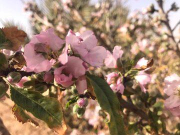 モロッコでも春はもうすぐそこに(2月)の画像