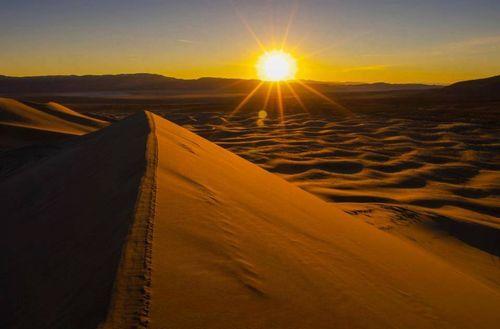 日の出,らくだ,ツアー,砂漠
